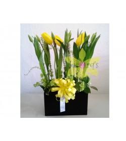 Sembrado de tulipanes