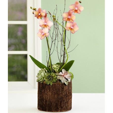 Orquídea en madera