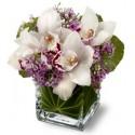 Detalle de orquídeas cymbidium