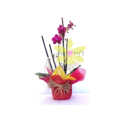 Orquídea estándard